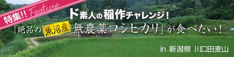 ド素人の稲作チャレンジ!「絶品の魚沼産・無農薬コシヒカリ」が食べたい!