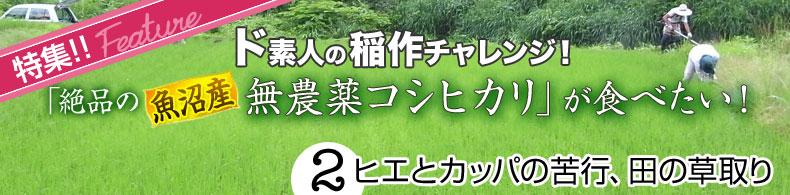 ド素人の稲作チャレンジ(2)ヒエとカッパの苦行、田の草取り