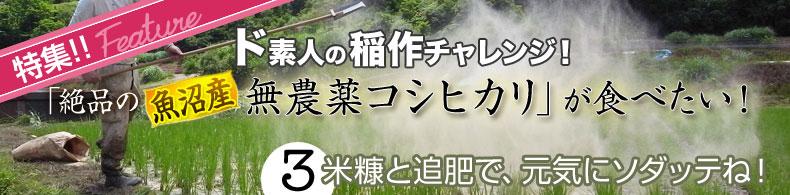 ド素人の稲作チャレンジ(3)米糠と追肥で、元気にソダッテね!