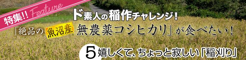 ド素人の稲作チャレンジ(5)嬉しくて、ちょっと寂しい「稲刈り」