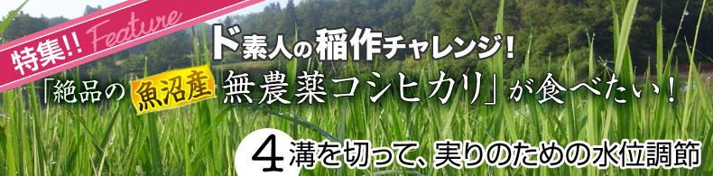 ド素人の稲作チャレンジ(4)溝を切って、実りのための水位調節